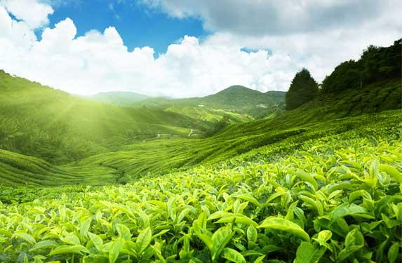 Thrissur-Munnar-Thekkady Tour Package